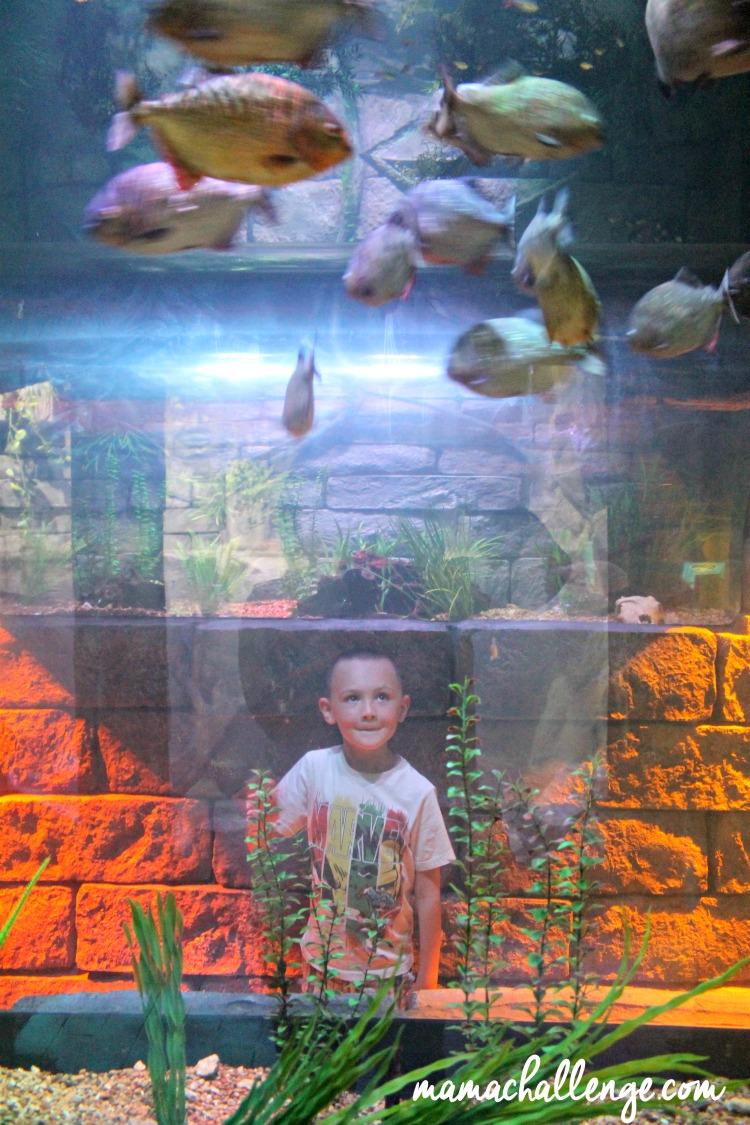 Sealife-Aquarium