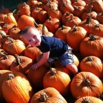 #To-Do #DFW: Enjoy fall with Celebrate #Roanoke, Autumn in the #Arboretum, & Flower Mound #Pumpkin Patch