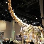 Dinosaur-Perot