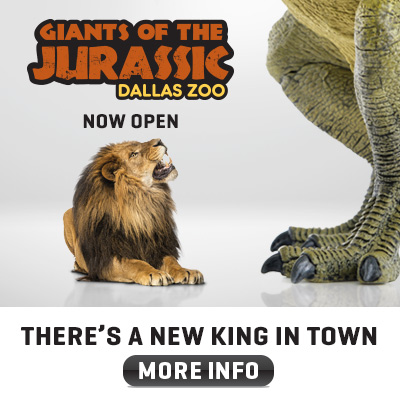 Dallas Zoo_MamaChallenge_400-x-400_lion
