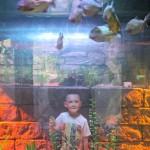 Rainforest Adventure SEA LIFE Aquarium Grapevine {Giveaway}