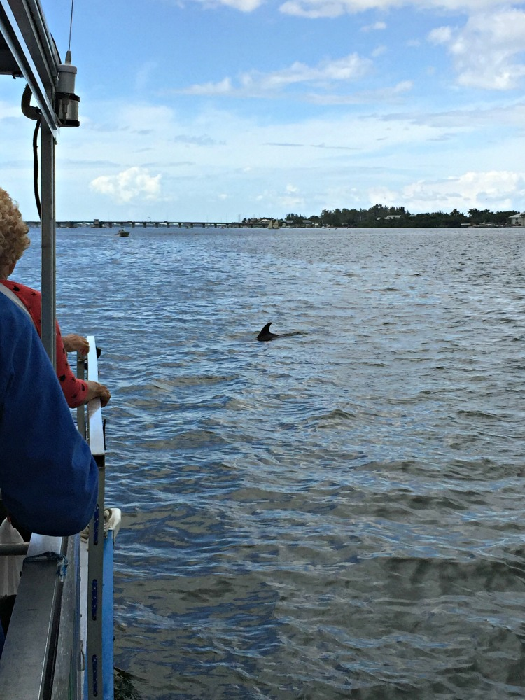 Bradenton Area Dolphin Spotting