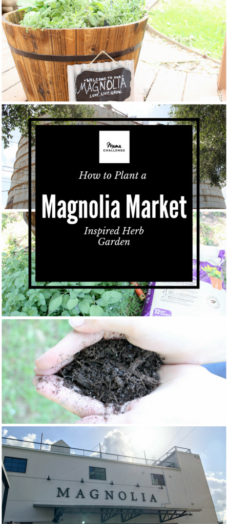How to Plant a Magnolia Inspired Garden