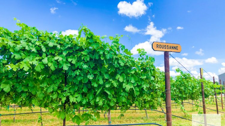Go: Guide to Fredericksburg and Texas Wine Country